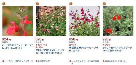 Cherry sage (5).jpg