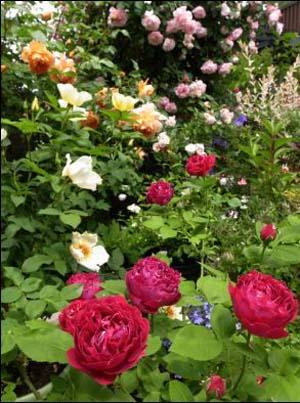 Rose Gardennew1 (1).jpg