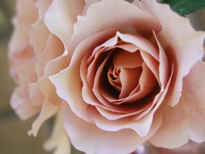 Rose Gardennew1 (2).jpg
