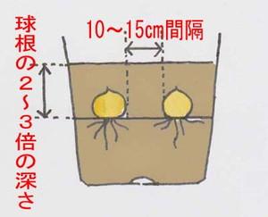 kyukon-uetike-1.jpg