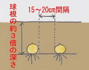 kyukon-uetike-2.jpg