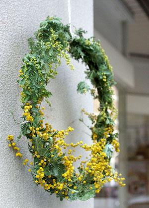 mimoza (1).jpg